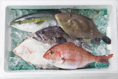 石巻産お任せ鮮魚BOX
